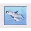 SeaWorld Print - Guy Harvey Exclusive Save the Vaquita