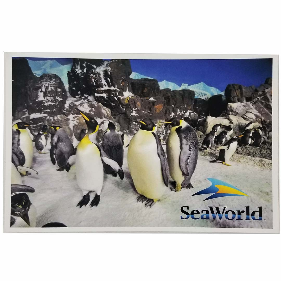SeaWorld Postcard - A Colony of Penguins