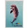 SeaWorld Postcard - Playful Bottlenose Dolphin