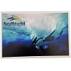 SeaWorld Postcard - Underwater Orca Swimming