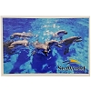 SeaWorld Postcard - A Pod of Bottlenose Dolphins