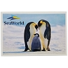 SeaWorld Postcard - Emperor Penguin Family