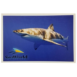 SeaWorld Postcard - Great White Shark