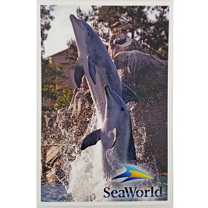 SeaWorld Postcard - Jumping Bottlenose Dolphins