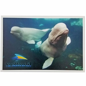 SeaWorld Postcard - Beluga Whales Swimming